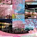 【2/10-3/10】第27回 河津桜まつり※今季終了