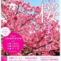 【2017.1.28~30】第2回 土肥桜まつり※今季終了